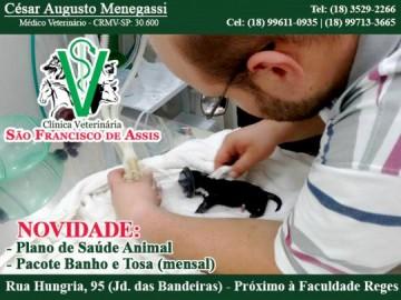 Adquira o pacote de banho e tosa e Plano de sa�de animal com a Clinica S�o Francisco de Assis