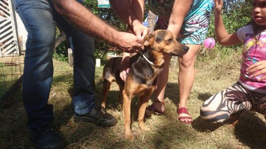 Pesquisa De Combate à Leishmaniose Em Cães Implantada Em